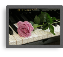 Pink Rose Prelude Canvas Print