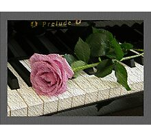 Pink Rose Prelude Photographic Print