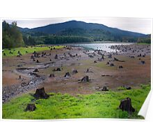 Dead Cut Stumps in Riverbed Poster