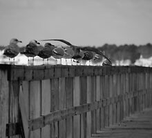 Getting in Line by Sabina D'Antonio