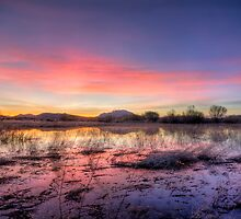 Pink Sundown by Bob Larson