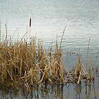 Stanwick Lakes, Northamptonshire by fotdmike