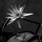 Lotus 3 by fflleeee