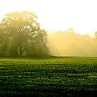 Veiled Tree by ShotsOfLove