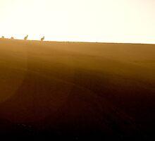 Kangaroo sunrise by Duncan Macfarlane