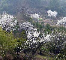Early Spring rural China by Dan Chang
