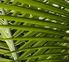 Palm Sunday by christiane