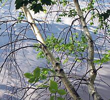Birch Over Water by Lynda Lehmann