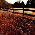 Farm Fence in Fall by mooselandtours