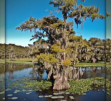 Cypress Trees on Caddo Lake by mjhphotos