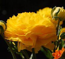 ButterCream: by Cherubtree