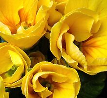 Yellow for spring! by artfulvistas