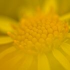 Blurred yellow flower by Gabor Pozsgai