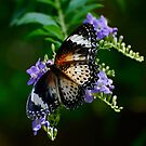 Lacewing on Lavender Flowers by Pamela Hubbard