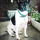 Eddie - on front porch by EdsMum