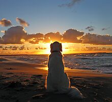 My Golden Retriever enjoys a beautiful sunset by Trine