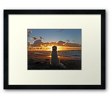 My Golden Retriever enjoys a beautiful sunset Framed Print