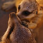meerkat baby love by trishie