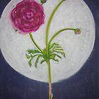 Ranunculus by Lois Keller