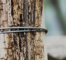 Timber and Wire by Adam1965