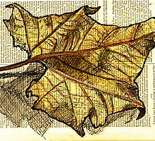 Autumn Leaf by seanh