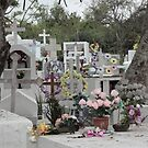 Galapagos Islands: Puerto Ayora Cemetary by tpfmiller