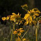 Desert Wildflowers by Linda Gregory