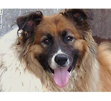 This Was T-Bone....Best Dog In The World!!! Photographic Print