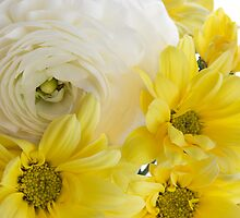Yellow on White by Ann Garrett