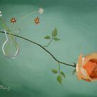 Rose Elegance by Christina Spiegeland