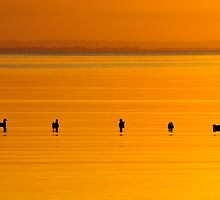 On Golden Pond by Garth Smith