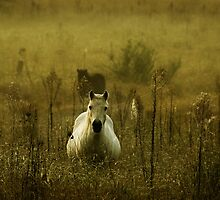 horse in the fog by ozzzywoman