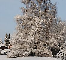 The Abominable Snow Tree - Münster by kitti
