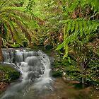 Tasmanian rainforest by traveller