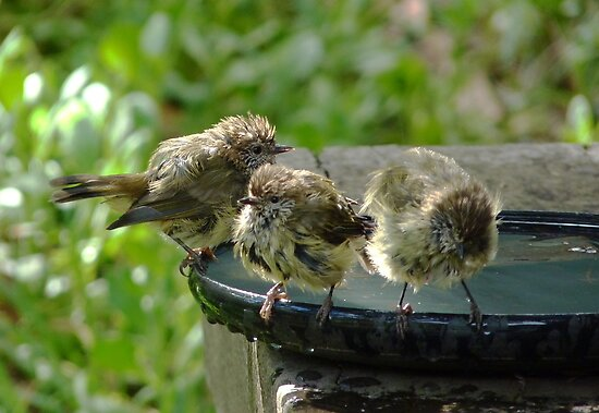Bathing Beauties of the Feathered Kind  #2 by Meg Hart