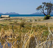 0002  On the road south - near Swansea, Tasmania by Hazel Hogarth