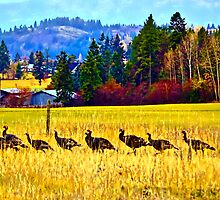 """The Wild Turkey Walk"" by Bruce Jones"
