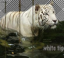 White Tiger by KylaLee