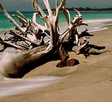 Driftwood - Gilli Islands, Indonesia by Normf