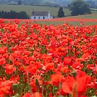 Local Poppy field, Shropshire, England by hjaynefoster