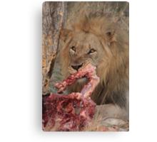 Lion's dinner Canvas Print