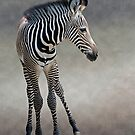 Dreams in Black and White (Grevy&#x27;s Zebra) by Krys Bailey