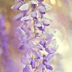Wisteria Wisps by Suzanne Cummings