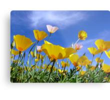 Poppies and Blue Arizona Sky Metal Print