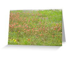 Texas Spring Wildflowers Greeting Card