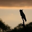 Cockatoo in the early morning - Upper Plenty by Vikki Shedden Photography