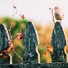 Fenced Bird by Carrie Bonham