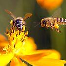 Move over Honey! by grannyshot