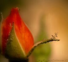 Dancin Aphids by Annie Lemay  Photography