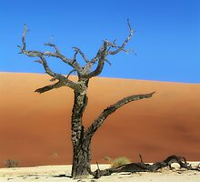 Died tree in sand desert by leksele